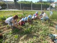 80 crianças do concelho visitaram as Hortas da Casa dos Choupos